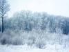 Казанские леса.